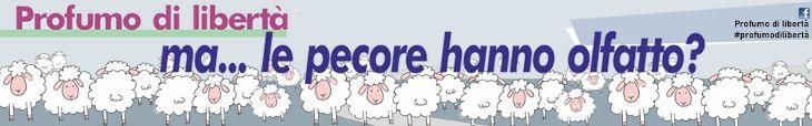 ma...le pecore hanno olfatto?