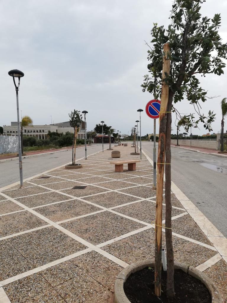 Nuovi alberi piantati sul territorio di Petrosino
