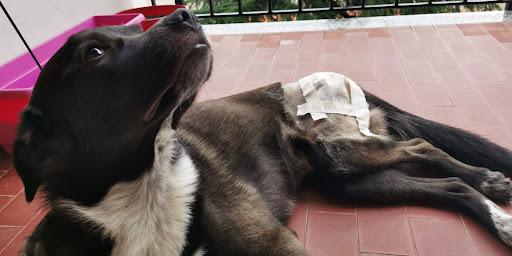 La displasia dell'anca, i consigli del nostro veterinario Pietro Ingrande (VIDEO)