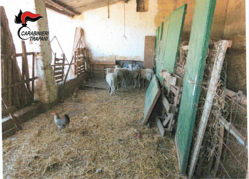 Trapani, i Carabinieri sequestrano 82 animali di vario tipo dopo la segnalazione di Enrico Rizzi
