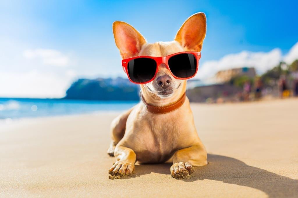 Cani in spiaggia, regole e consigli per un'estate da favola