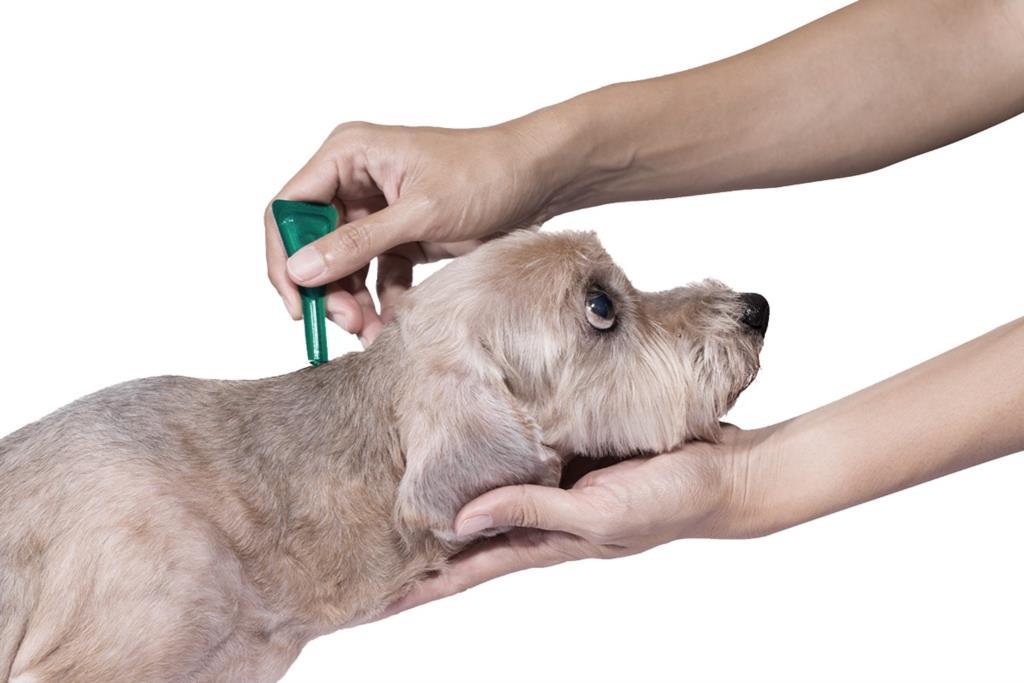 Antiparassitari per cani e gatti, come scegliere il migliore? (VIDEO)