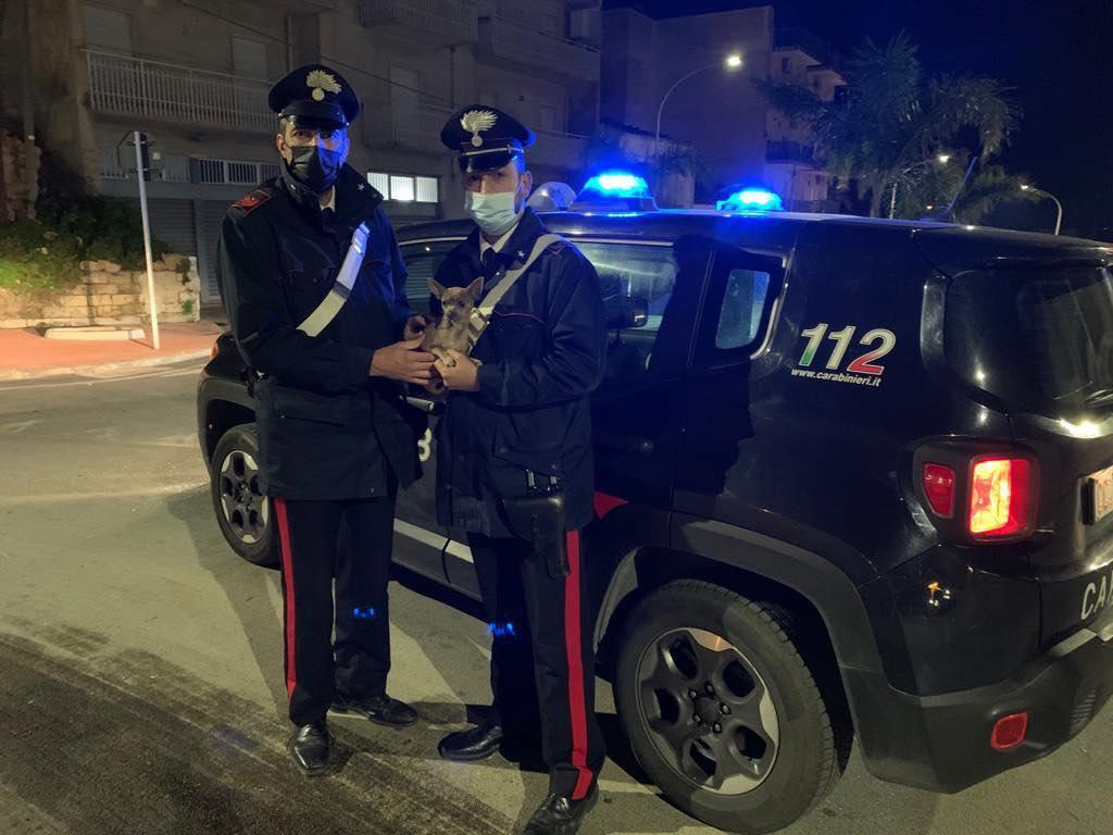 Smarrito e impaurito per strada, i Carabinieri salvano un cagnolino ad Alcamo