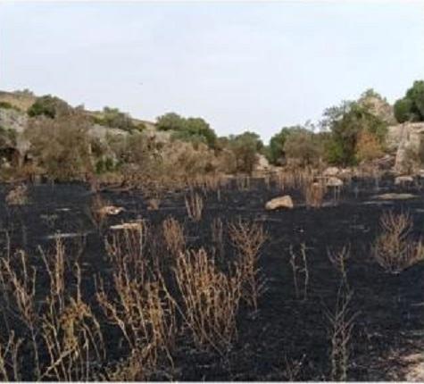 Incendio alle cave di Cusa, le fiamme lambiscono i rocchi