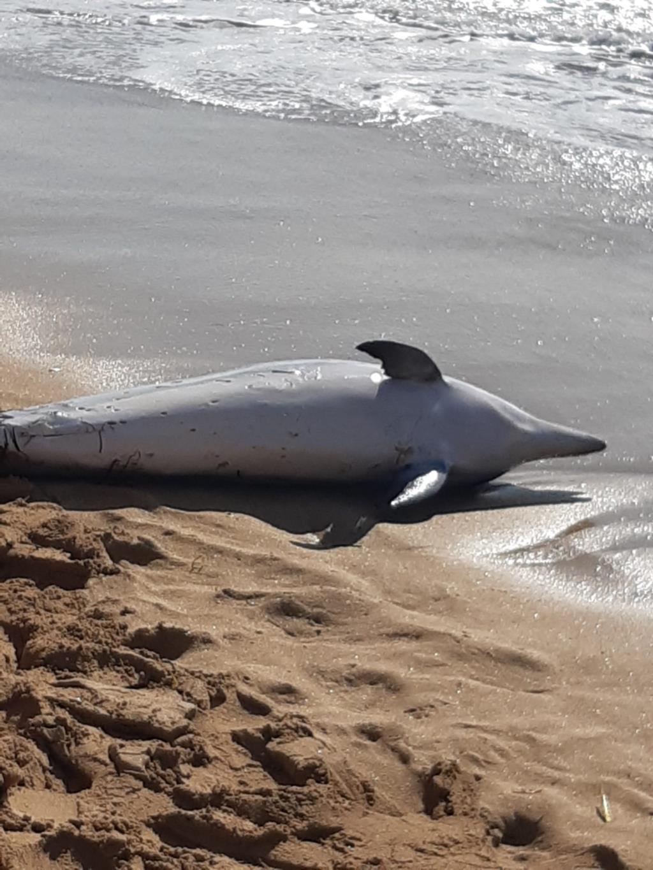 Erice, delfino morto sulla spiaggia di San Giuliano