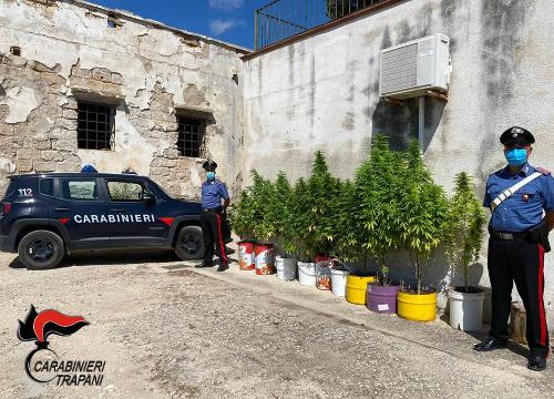 Trapani: coltiva piante di marijuana, in manette un cinquantunenne