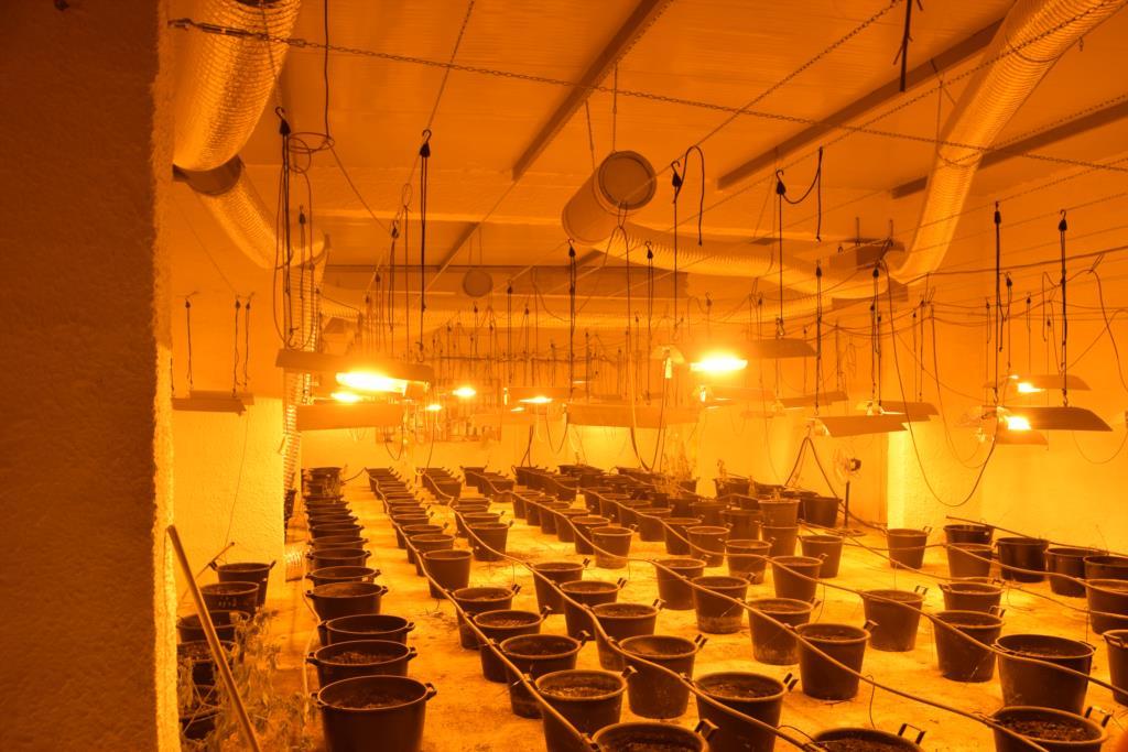 Salemi, scoperta una serra per la coltivazione della marijuana