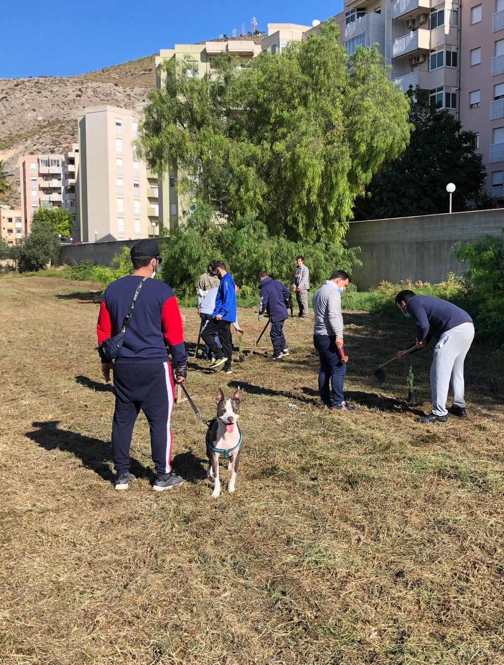 Trapani, 50 piante a Villa Rosina per la Giornata dell'albero