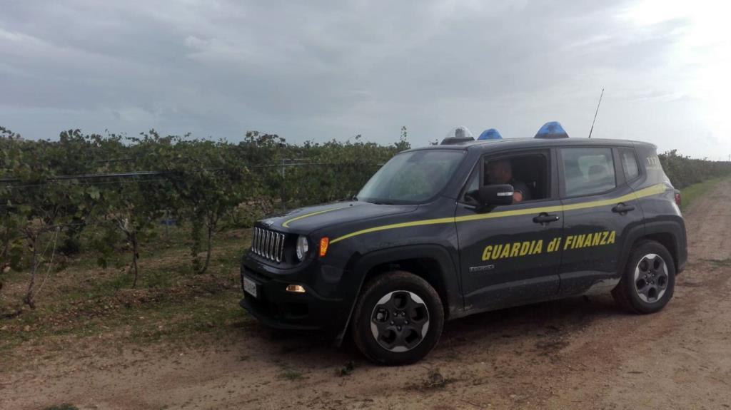 Salemi, scoperta piantagione di marijuana tra gli alberi d'ulivo