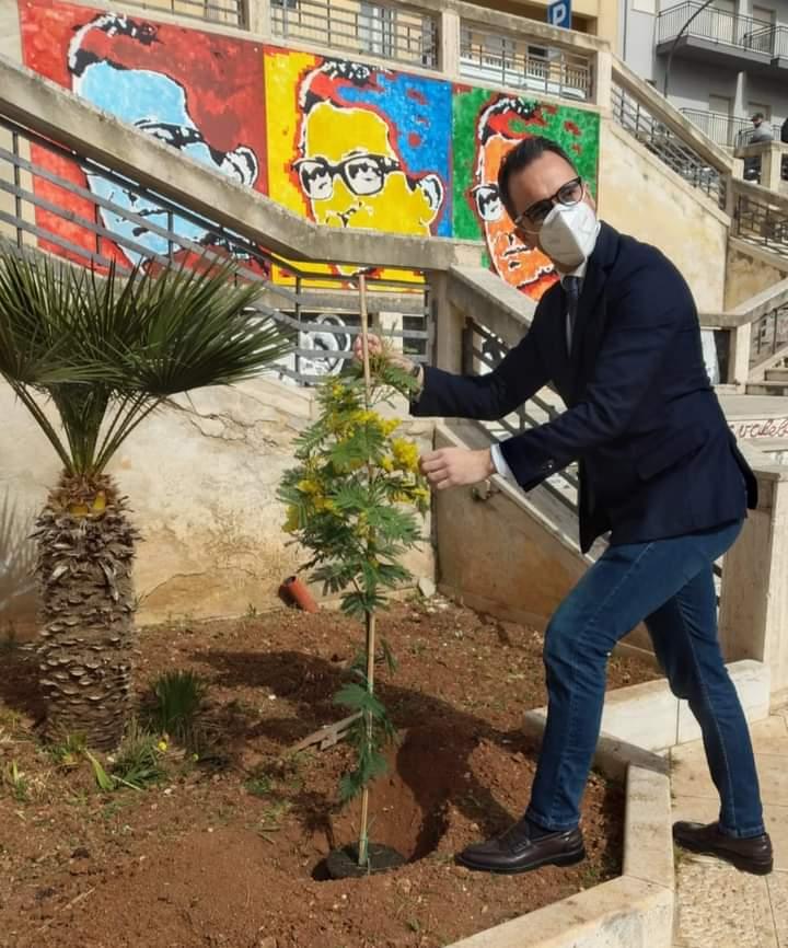 8 marzo a Valderice, il sindaco pianta due alberi di mimosa in piazza Pertini