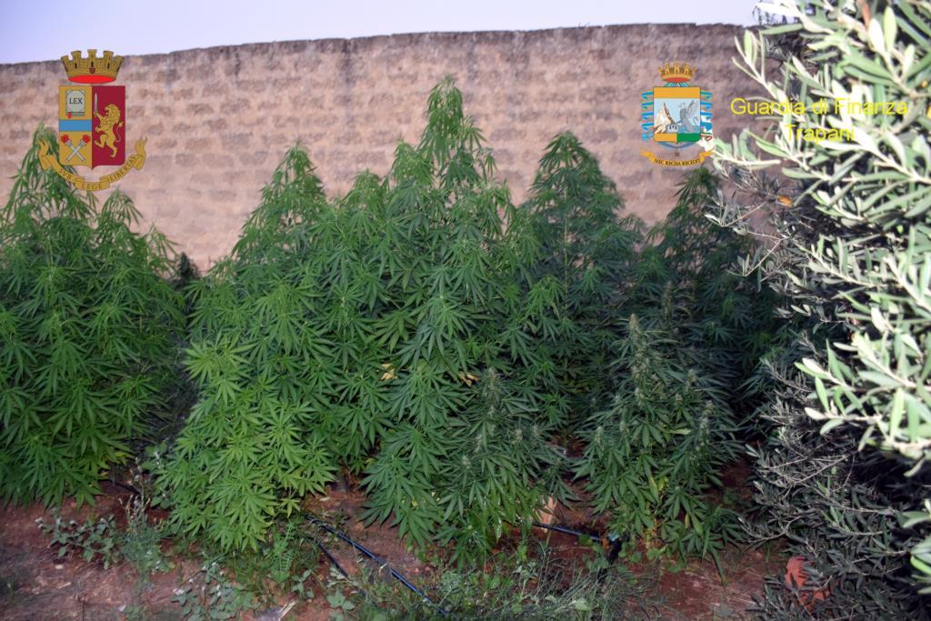 Mazara, scoperta piantagione di cannabis: un arresto e una denuncia (VIDEO)