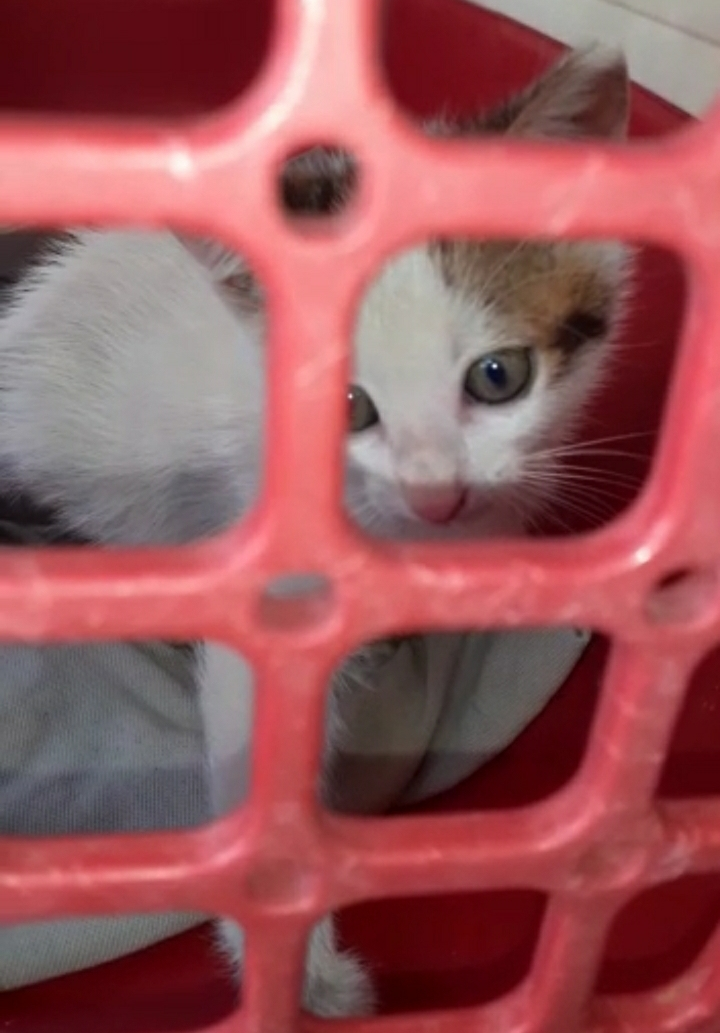 Castellammare, gattina impallinata salvata dalla Polizia municipale