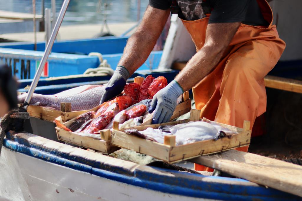 Etichettatura e tracciabilità del pescato locale, il bando del Flag trapanese