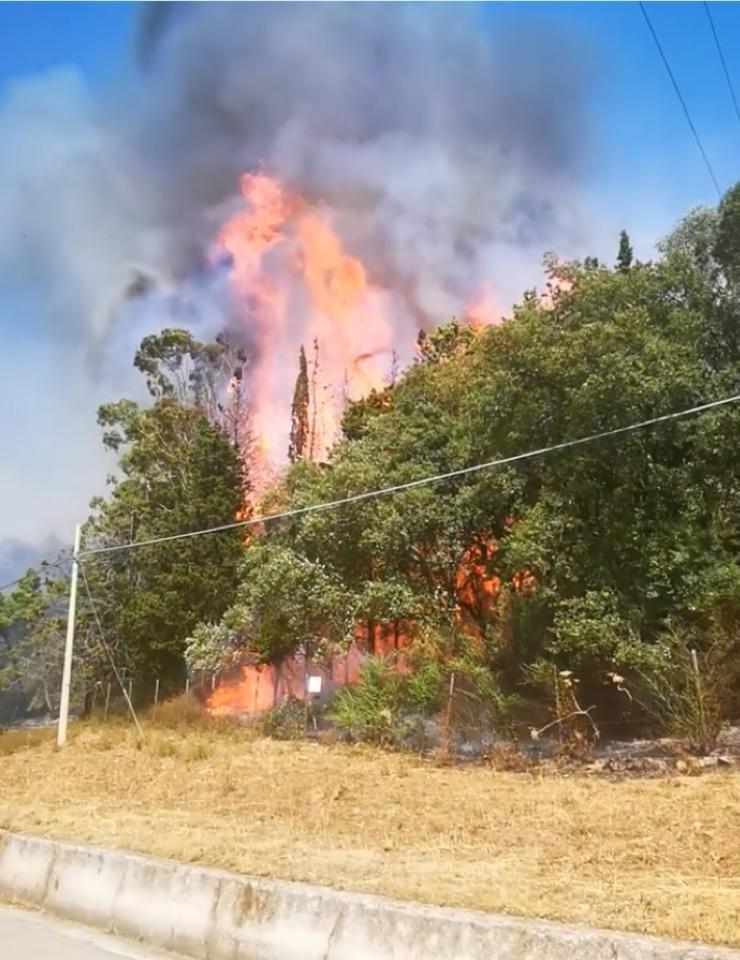 Emergenza incendi, brucia anche il Bosco Scorace (VIDEO)