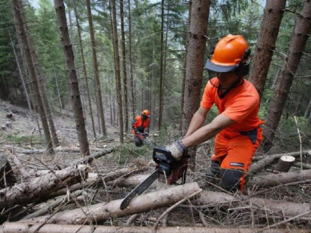 Il governo Musumeci approva la riforma dei forestali