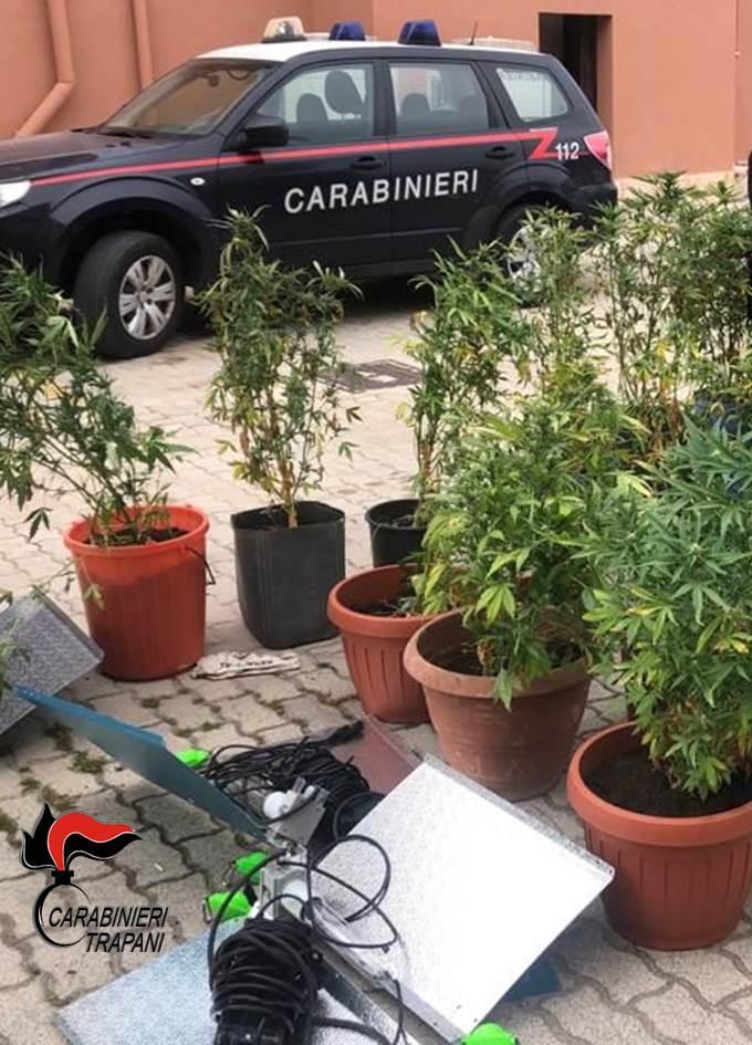 Afghan kush, la nuova varietà di canapa indiana scoperta a Pantelleria, un arresto