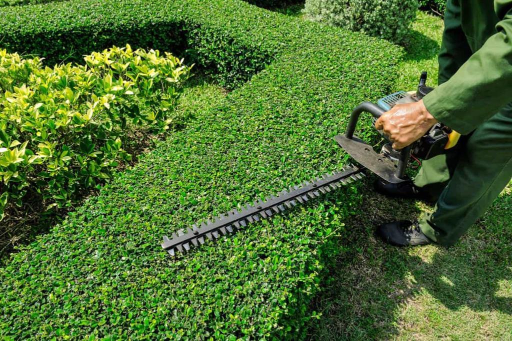 Petrosino, pulizia aree private: il sindaco firma l'ordinanza