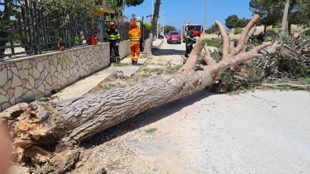 Erice, alberi e pali caduti: ieri giornata difficile per gli operatori della Protezione Civile