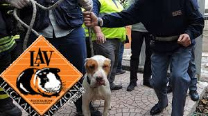 Rapporto Zoomafie, in Sicilia un indagato ogni sette ore per reati contro gli animali