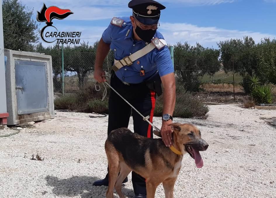 Salaparuta: maltratta il cane, denunciata una donna