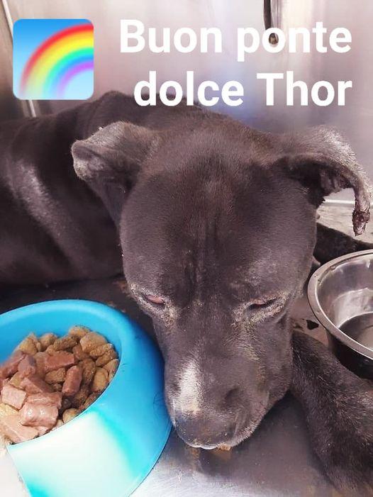 L'omaggio a Thor, il gigante buono che è salito sul ponte