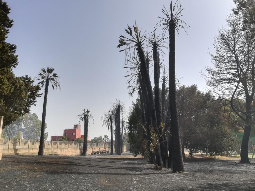 Incendio anche al Villaggio Azzurro, riaperta l'A29  (VIDEO)