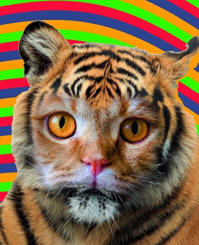 Oggi si celebra la Giornata del gatto (Video)