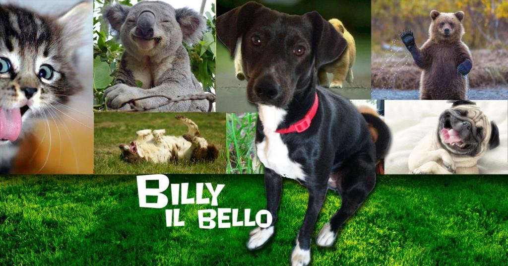 Billy il bello, Chicco il gioiello e la divina Charlie (VIDEO)