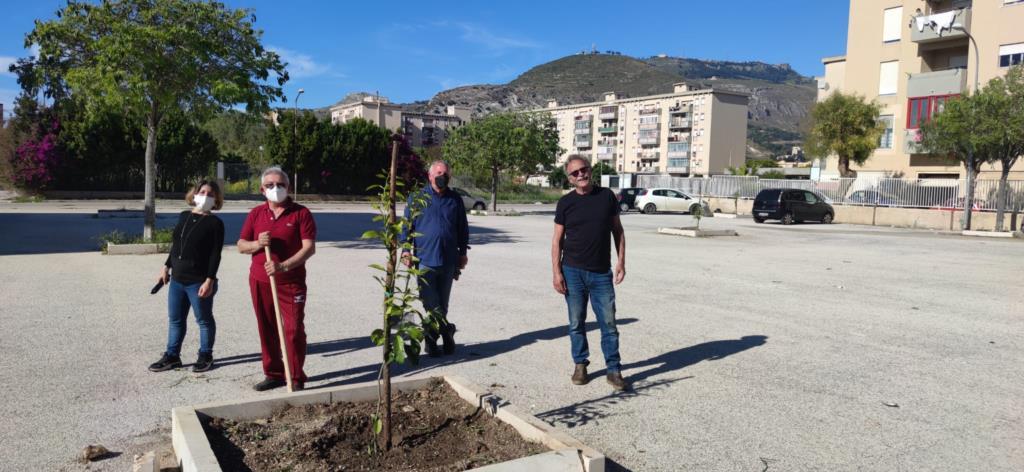 Cittadini-giardinieri in via De Santis a Trapani, piantumati alberi di arancio amaro