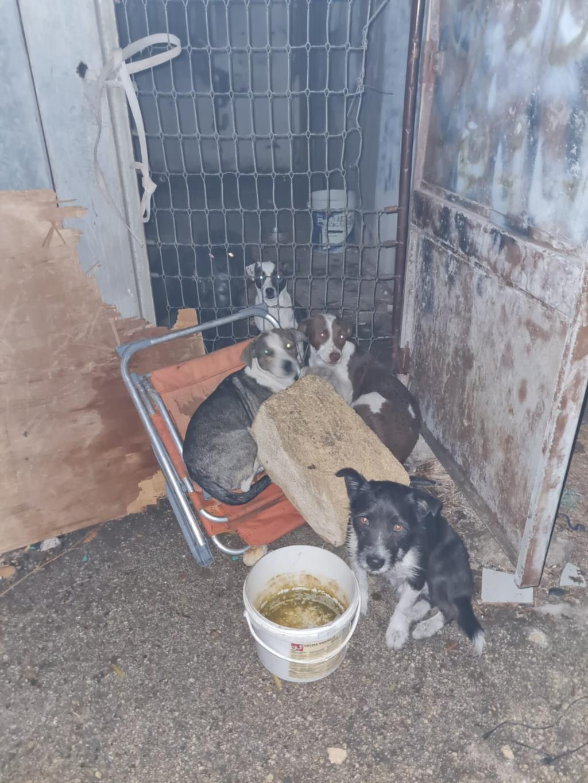 Trapani, rischiavano di morire intossicati: salvati 9 cani